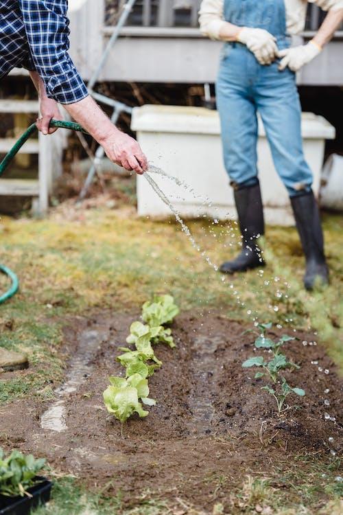 Бесплатное стоковое фото с Анонимный, безликий, ботаника