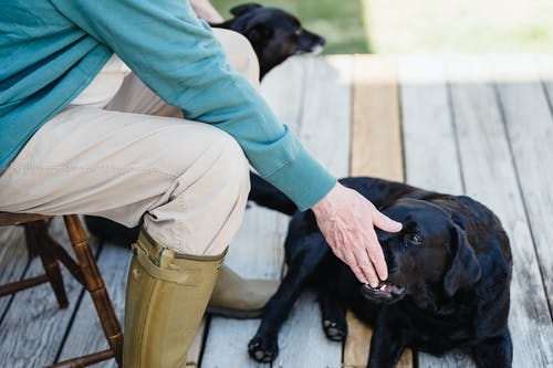 Crop person sitting on wooden terrace and feeding Labrador