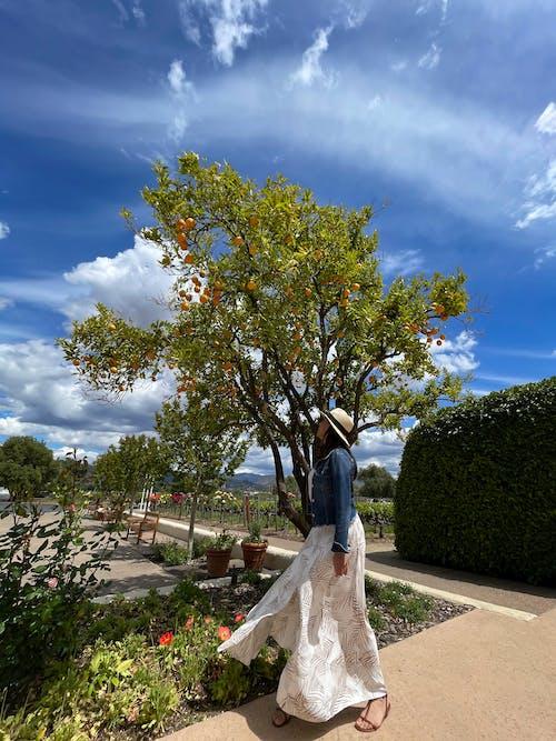 Free stock photo of blue sky, latina, orange treet