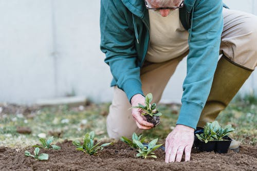 Crop unrecognizable male farmer putting green seedlings into soil while working on plantation
