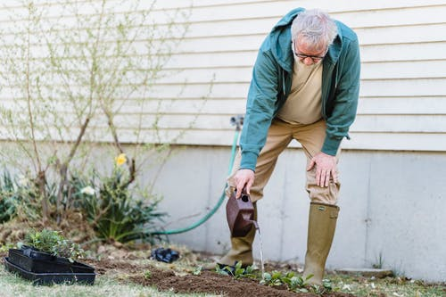 Senior male farmer in gumboots standing with can and watering green sprouts against wall