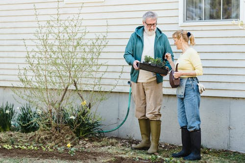 Full length of senior male showing box with seedlings to wife while standing near wooden house in rain boots