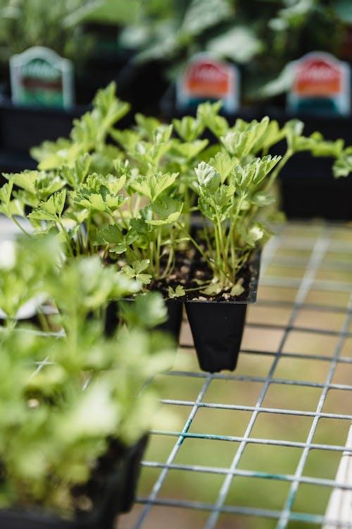 Green Plants in Black Pot