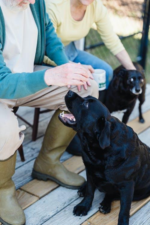 Kostenloses Stock Foto zu glück, haustiere, hunde