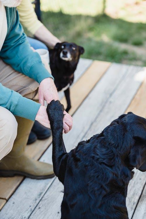 Die Pfote Eines Hundes An Der Hand Einer Person