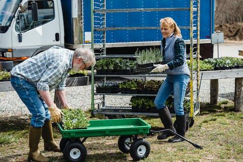 Gratis lagerfoto af ældre par, gartnere, gartnerier