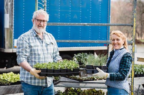 Gratis lagerfoto af ældre par, flora, gartnere