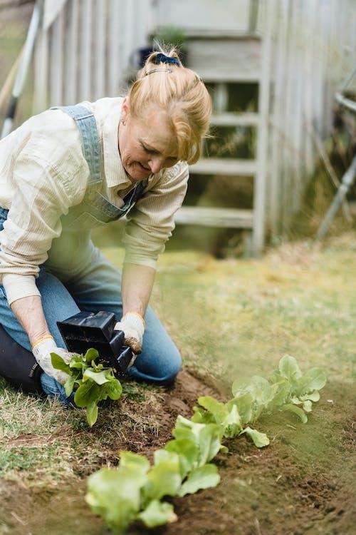 Imagine de stoc gratuită din adult, agricultură, bătrân