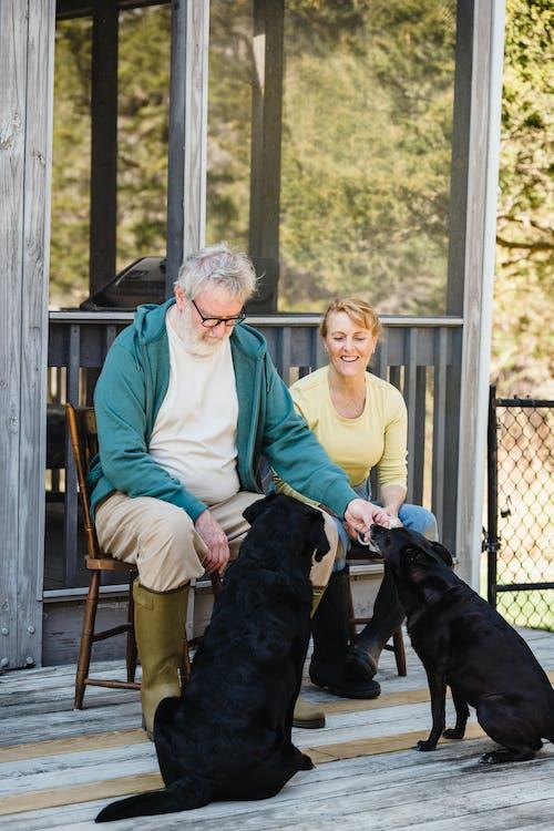 älteres Ehepaar Schaut Auf Seine Hunde