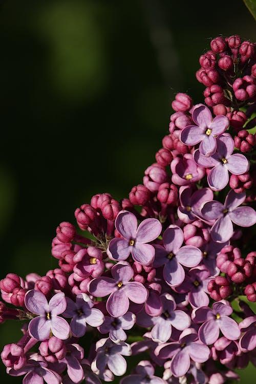 Gratis stockfoto met blad, bloem, bloemen