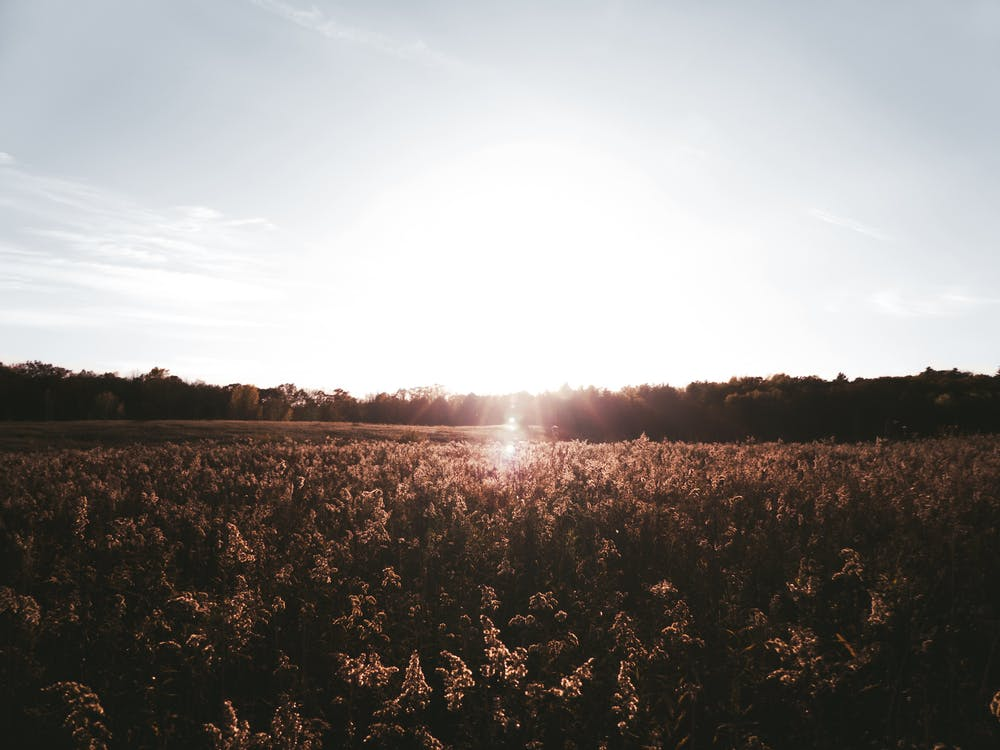 Silhouette Photography of Grass Field