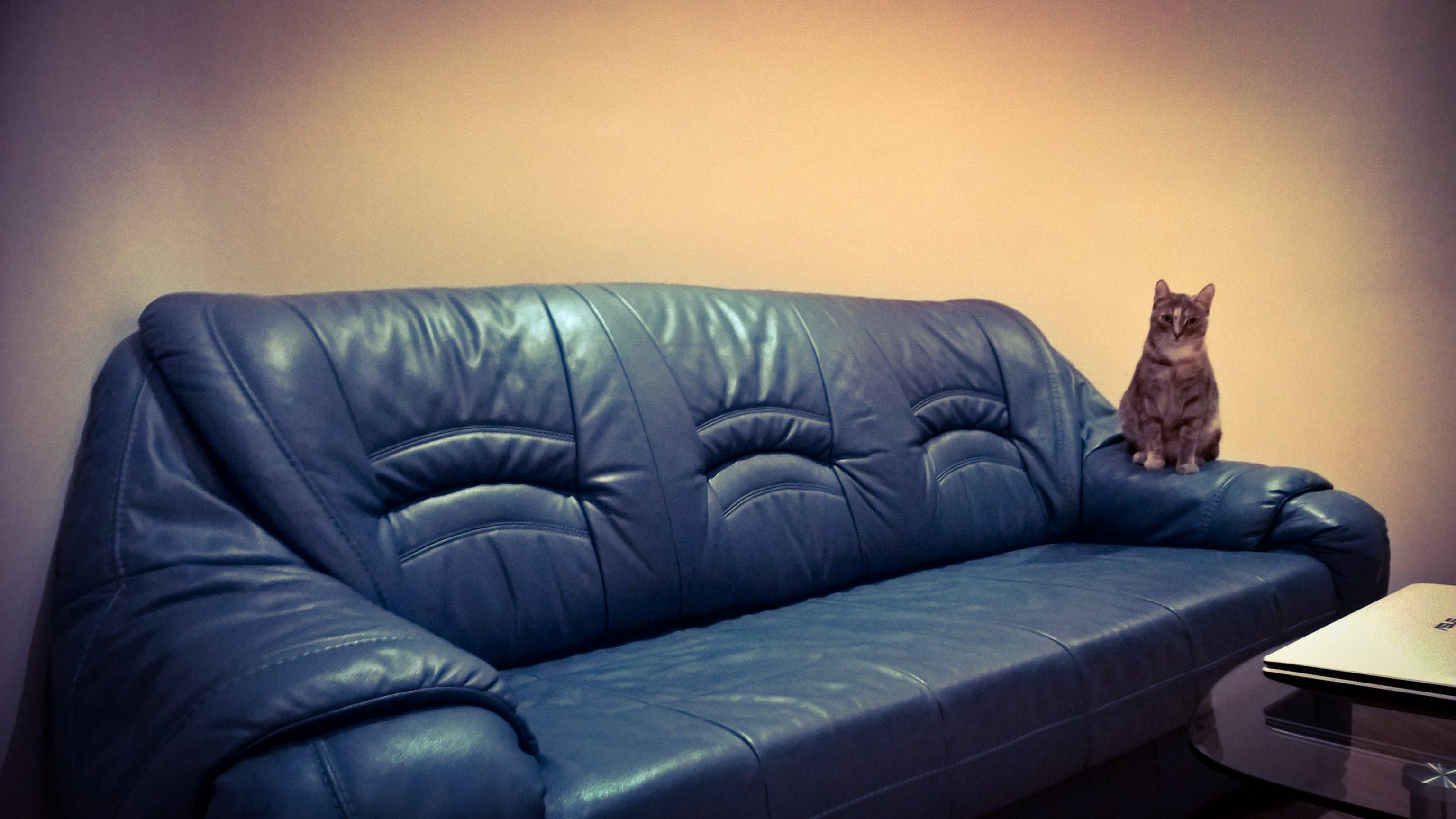 Free stock photo of cat, sofa, hungary, Budapest