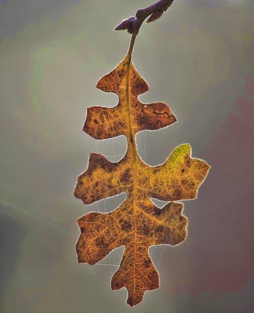Základová fotografie zdarma na téma list, makro, padání, podzim
