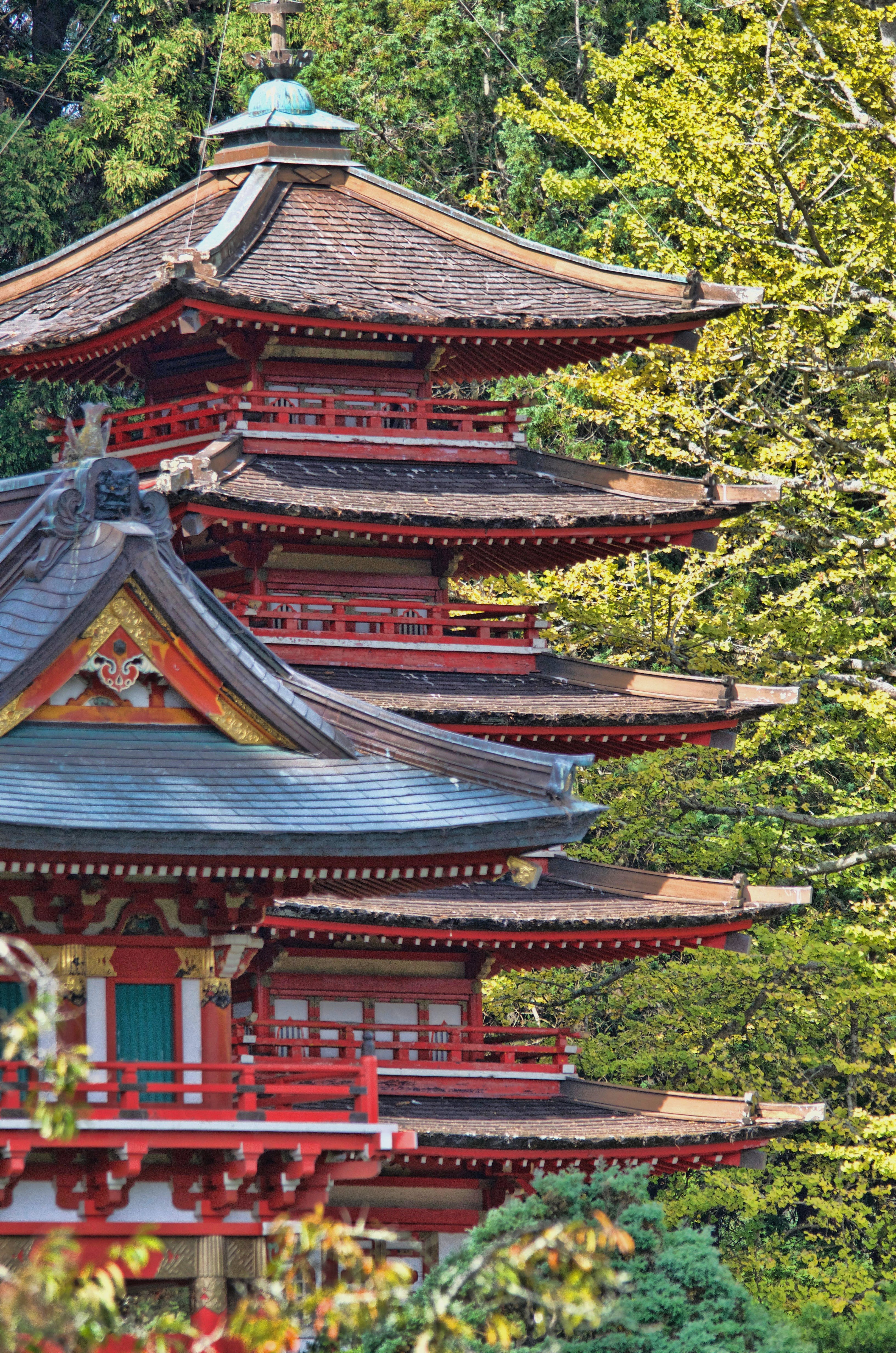 Red and Blue Temple Behind Green Leaf Trees at Daytime