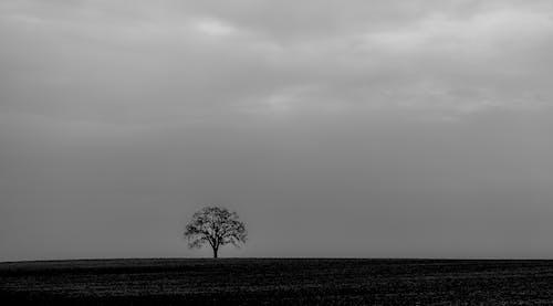 Imagine de stoc gratuită din alb-negru, arbore, cer, fotografie de unghi larg