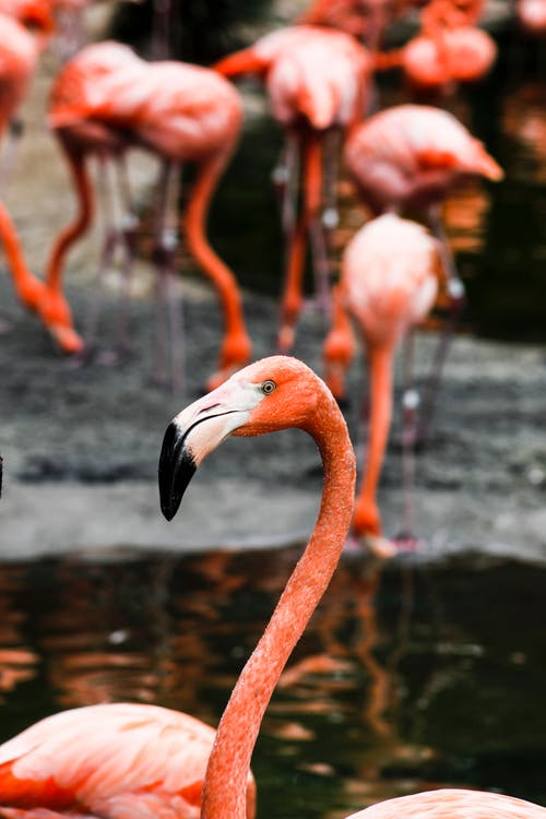 Fotobanka sbezplatnými fotkami na tému detailný záber, divočina, divý, exotický