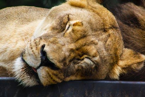 Foto stok gratis alam liar, bahaya, berbahaya, binatang