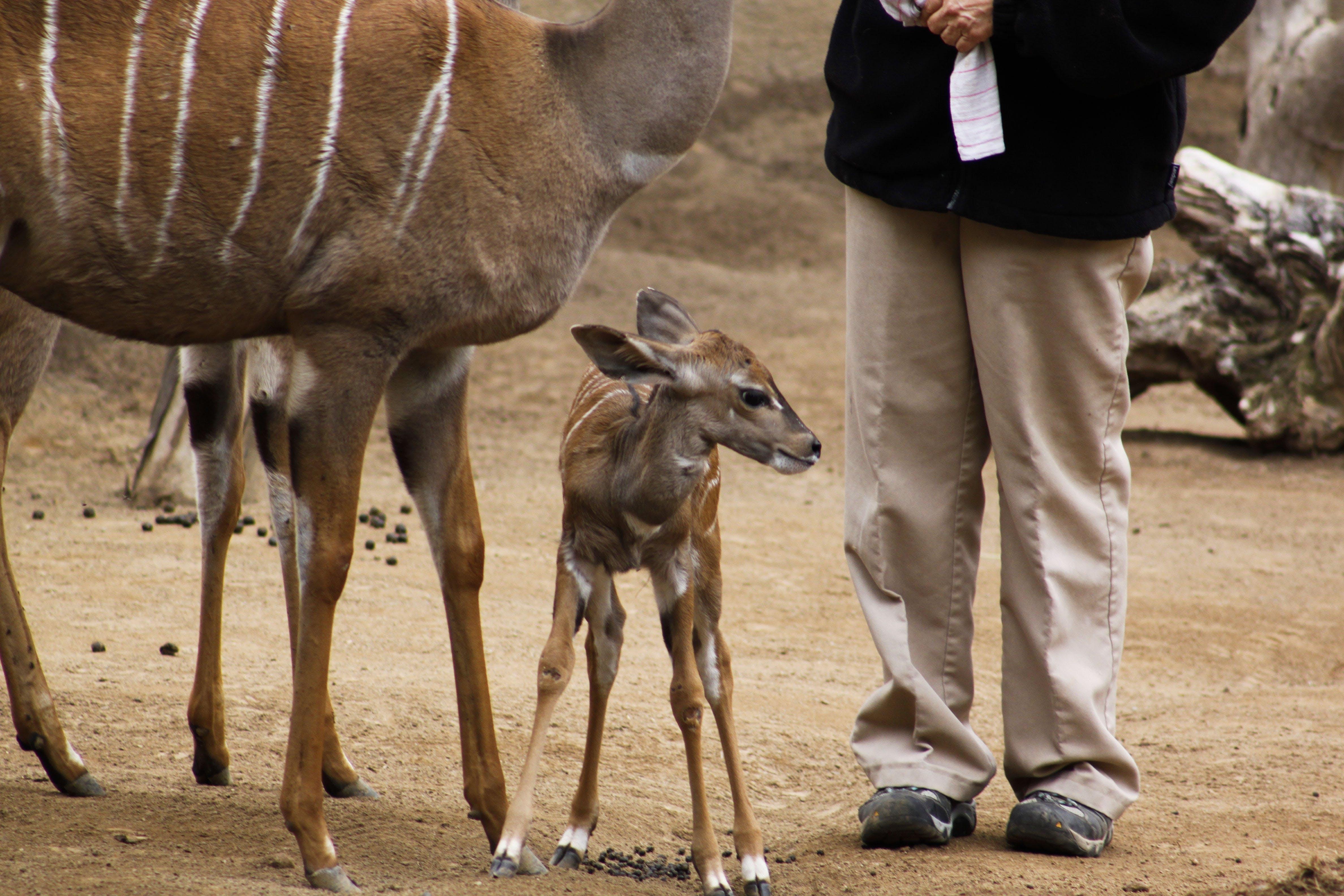 Kostenloses Stock Foto zu afrika, barbarisch, person, safari
