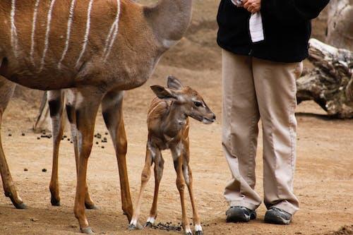 Foto stok gratis Afrika, barbar, binatang, binatang buas