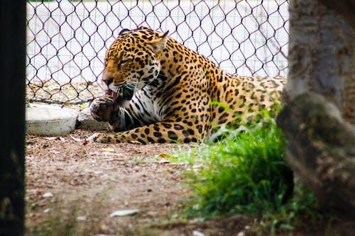 動物, 動物攝影, 動物肖像, 哺乳動物 的 免费素材照片