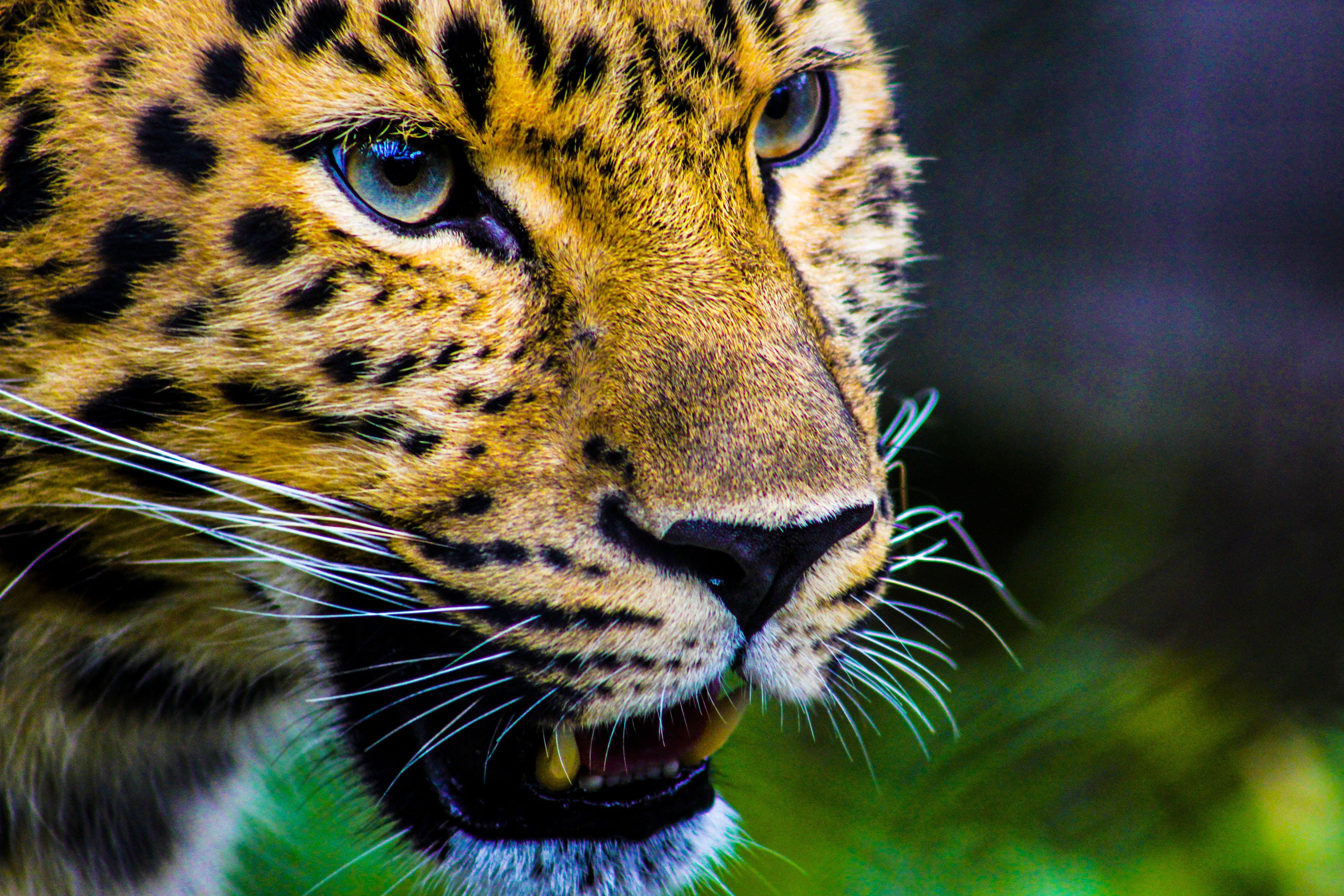 Photography Of Cheetah