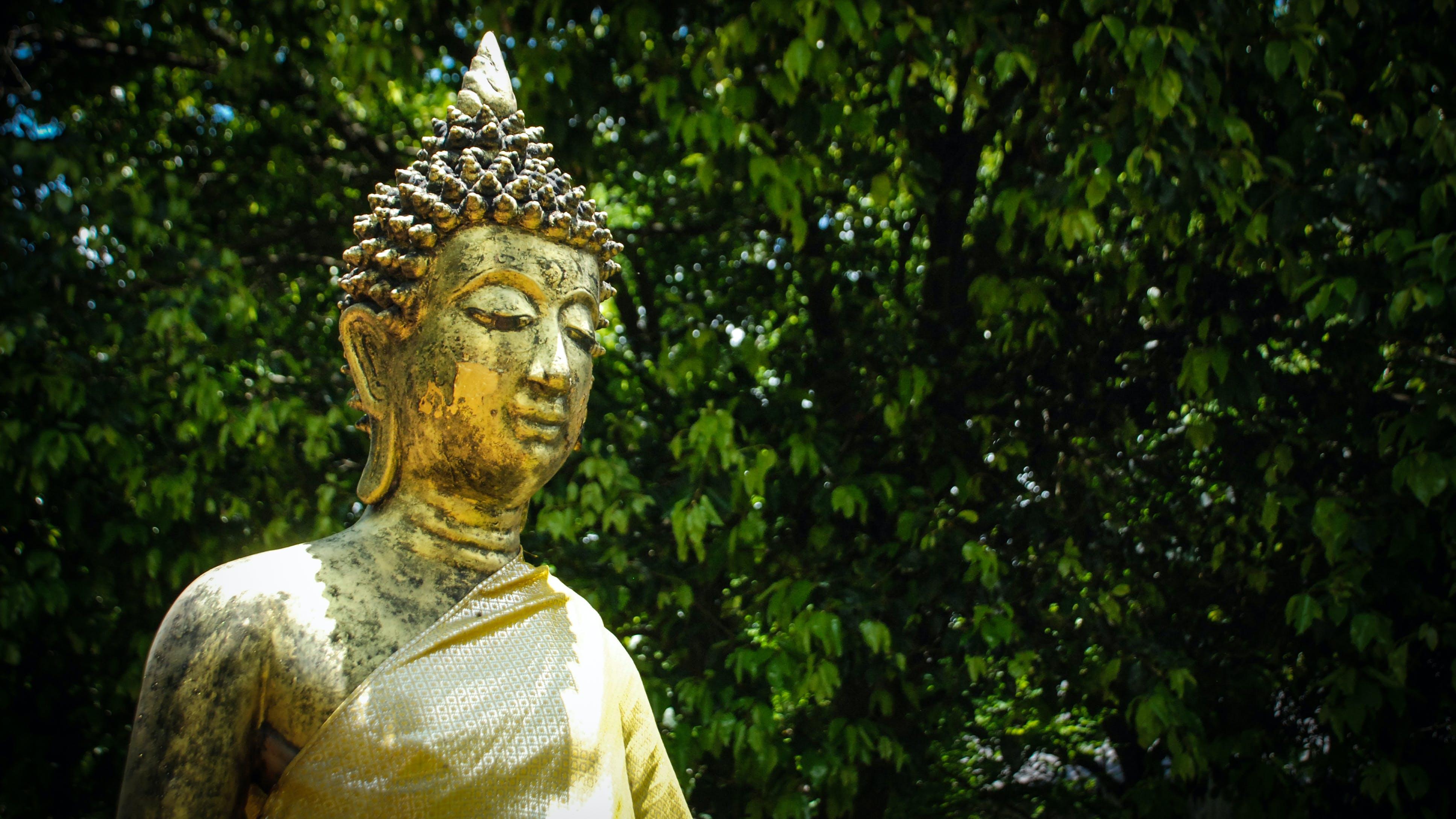Kostenloses Stock Foto zu buddha