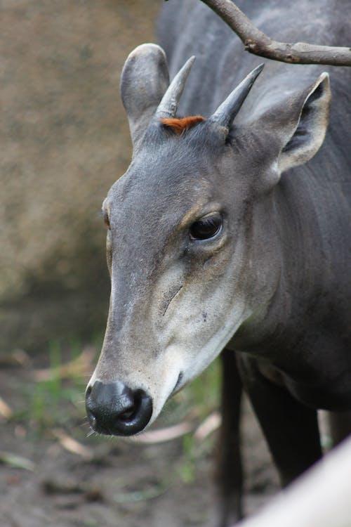 carnivor, 動物園, 動物王國, 動物肖像 的 免費圖庫相片