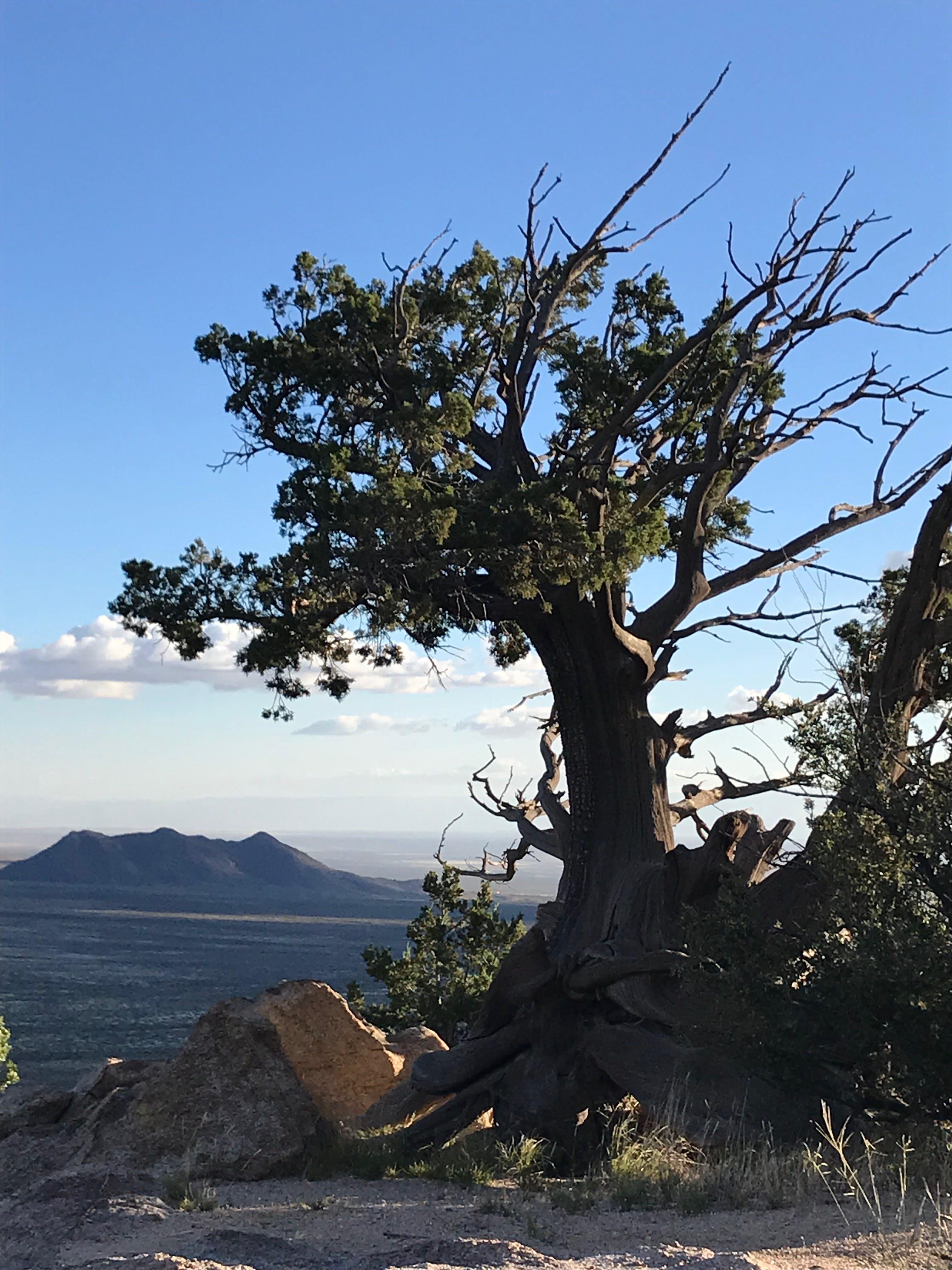 Kostenloses Stock Foto zu holz, landschaft, natur, himmel