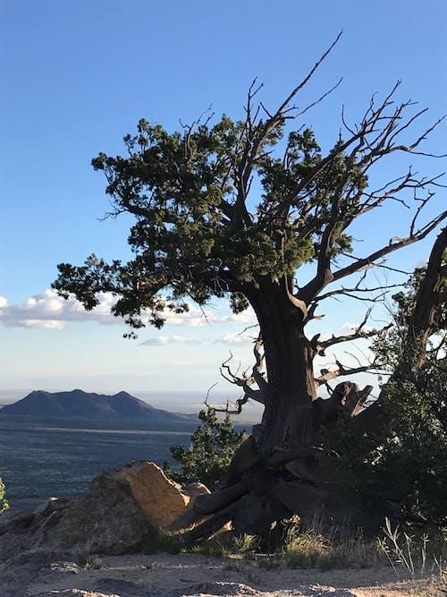 Photos gratuites de arbre, bois, branches, caillou