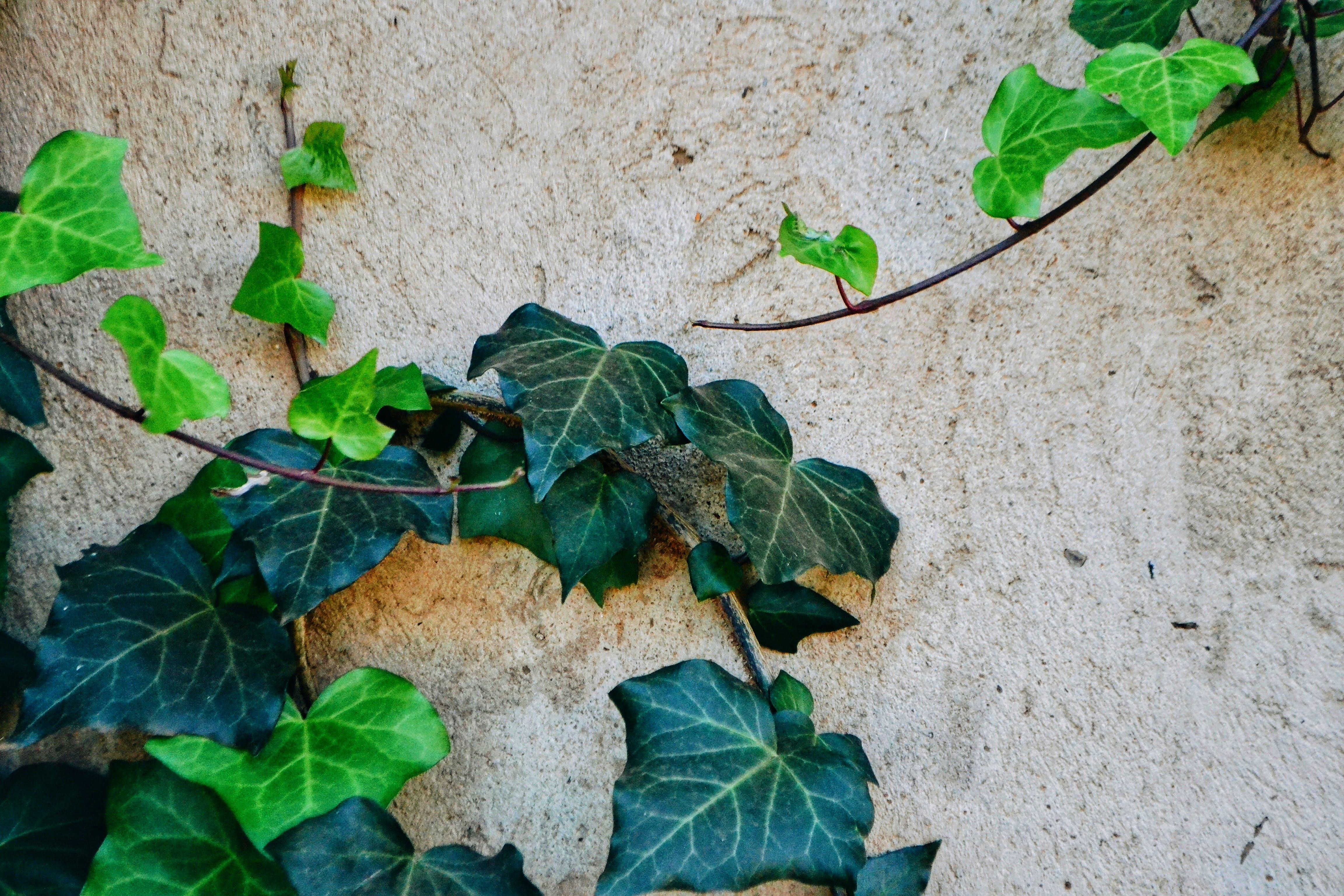 Gratis lagerfoto af have, humør, minimal, mørkegrøn