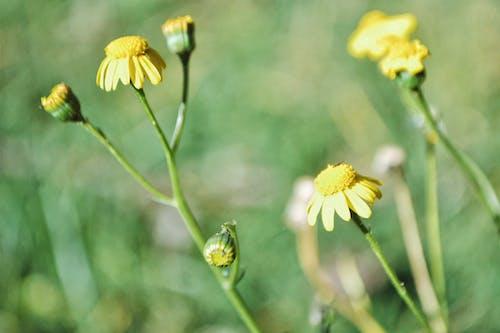 Gratis lagerfoto af blomst, blomster, flora, Kenya