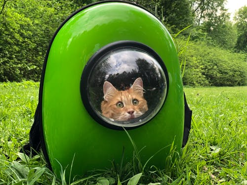 Orange Tabby Cat in Green Plastic Container