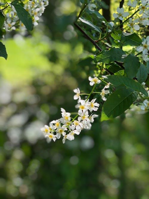 White Flower on Green Stem