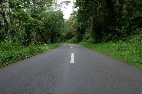 Gray Concrete Road in Between Green Trees