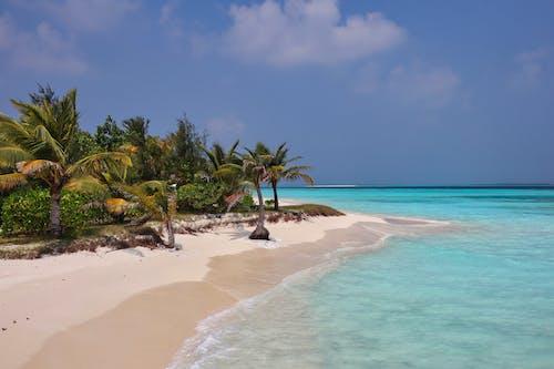 Foto d'estoc gratuïta de cocoters, fotografia de natura, illa tropical