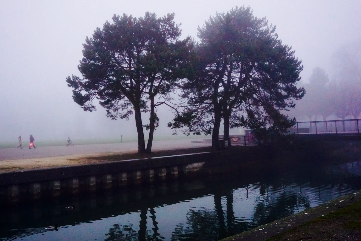 Free stock photo of fog, reflection, water