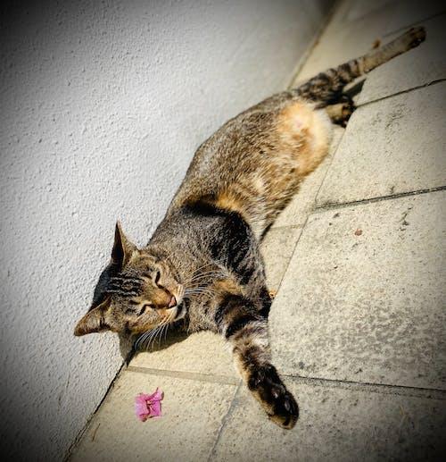 Free stock photo of cat, cute cat