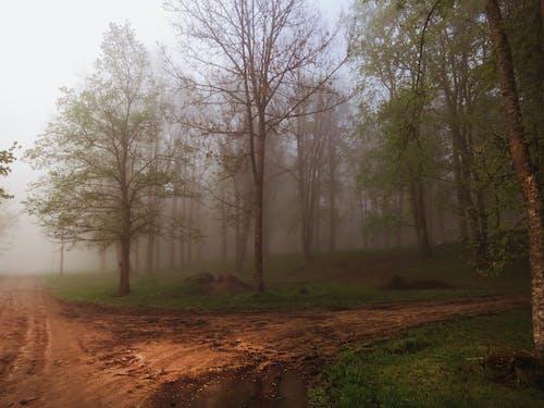 Gratis lagerfoto af bypark, forkølelse, tåget, træer