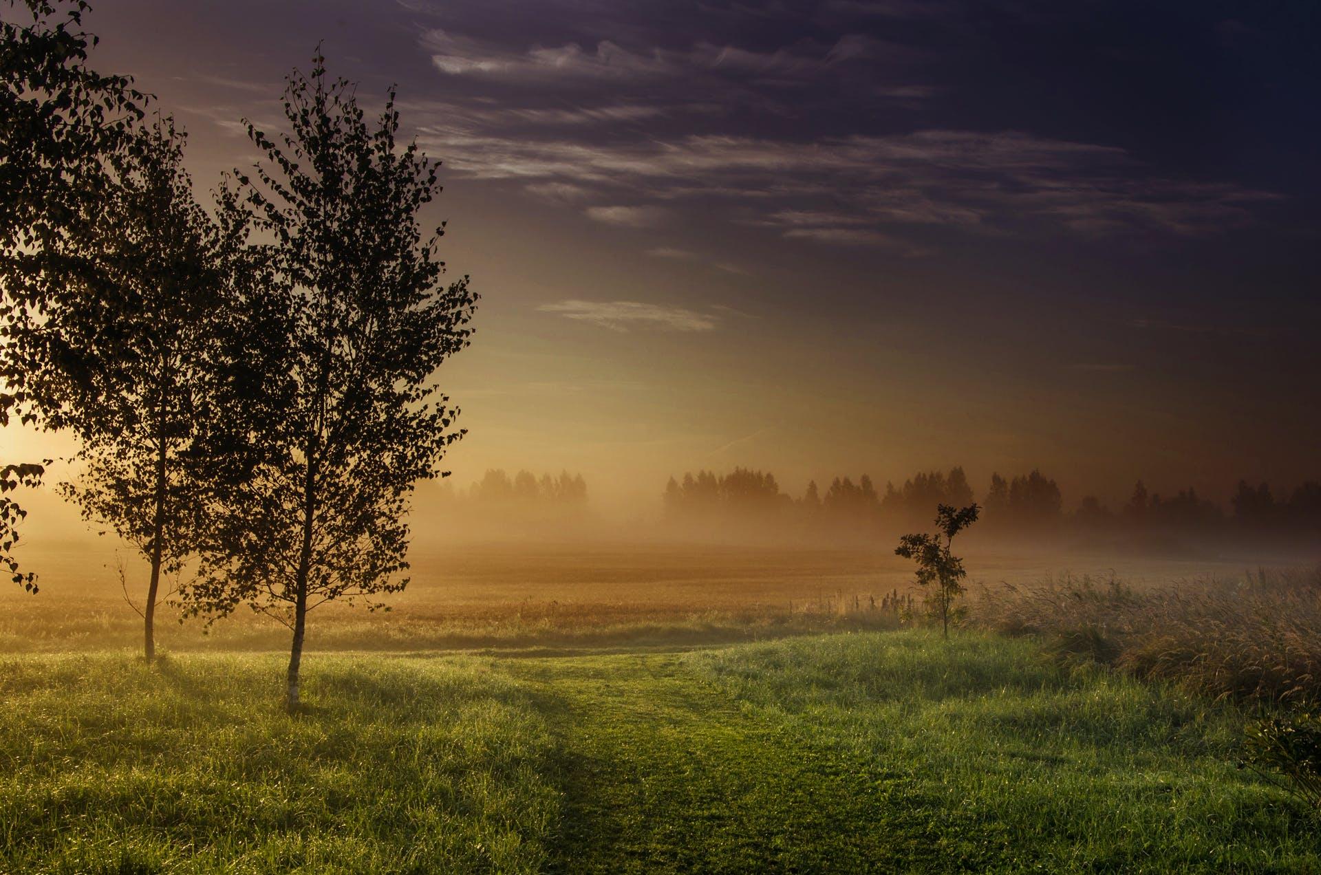 Landscape Photography Green Grass-field Beside Dark Foggy Forest during Golden Hour