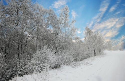 Gratis lagerfoto af forkølelse, letland, sne, tidligt om morgenen