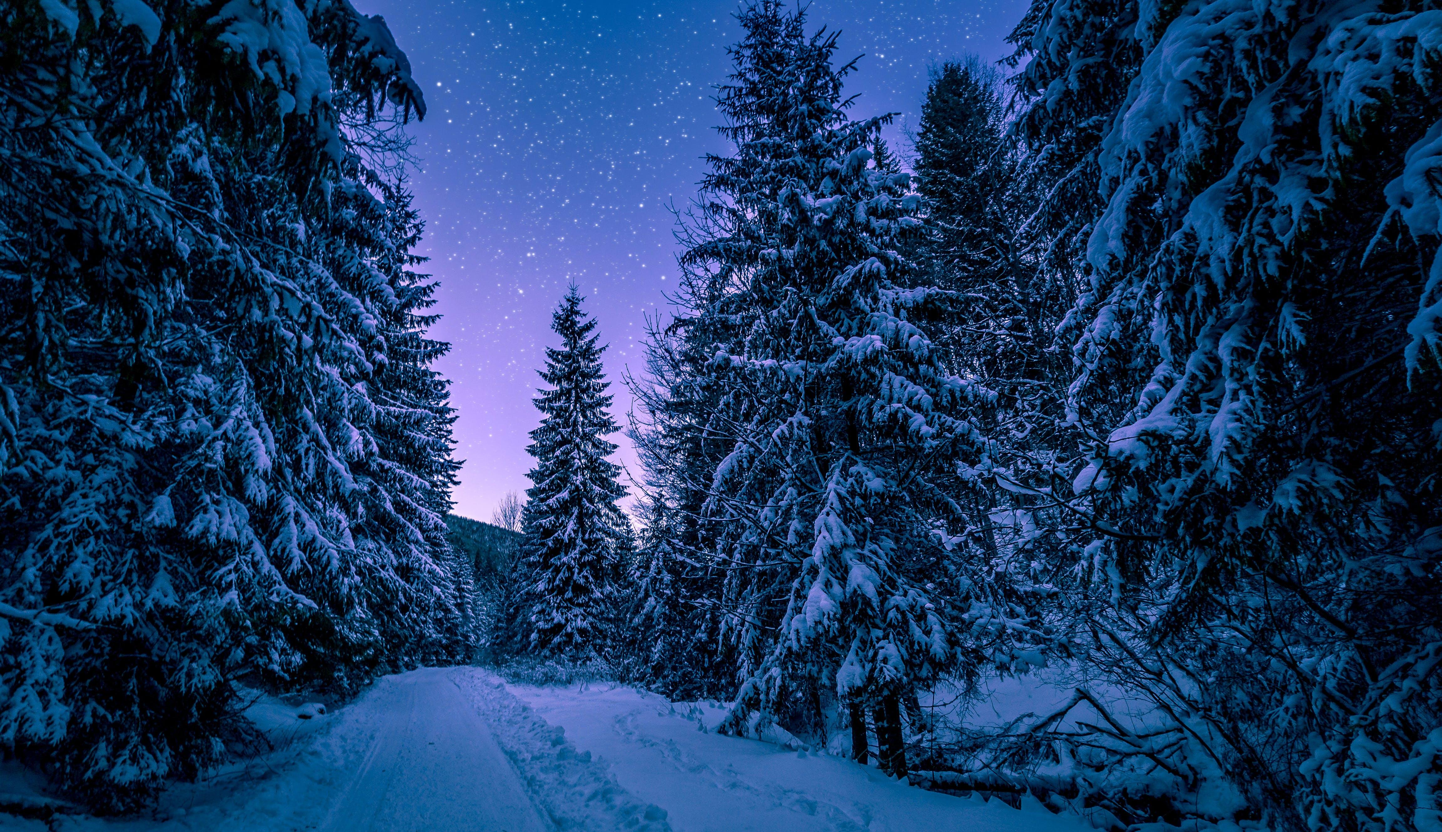 äste, bäume, einfrieren
