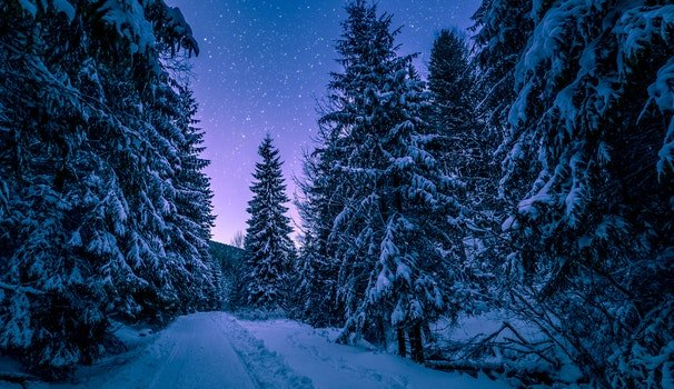 Photography of Trees Covered With Snow