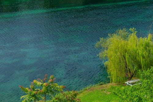 Free stock photo of bright colors, calm, river