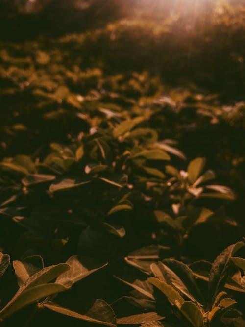 Selektive Fokusfotografie Von Pflanzen