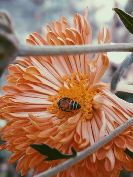 Photography of Bee On Flower