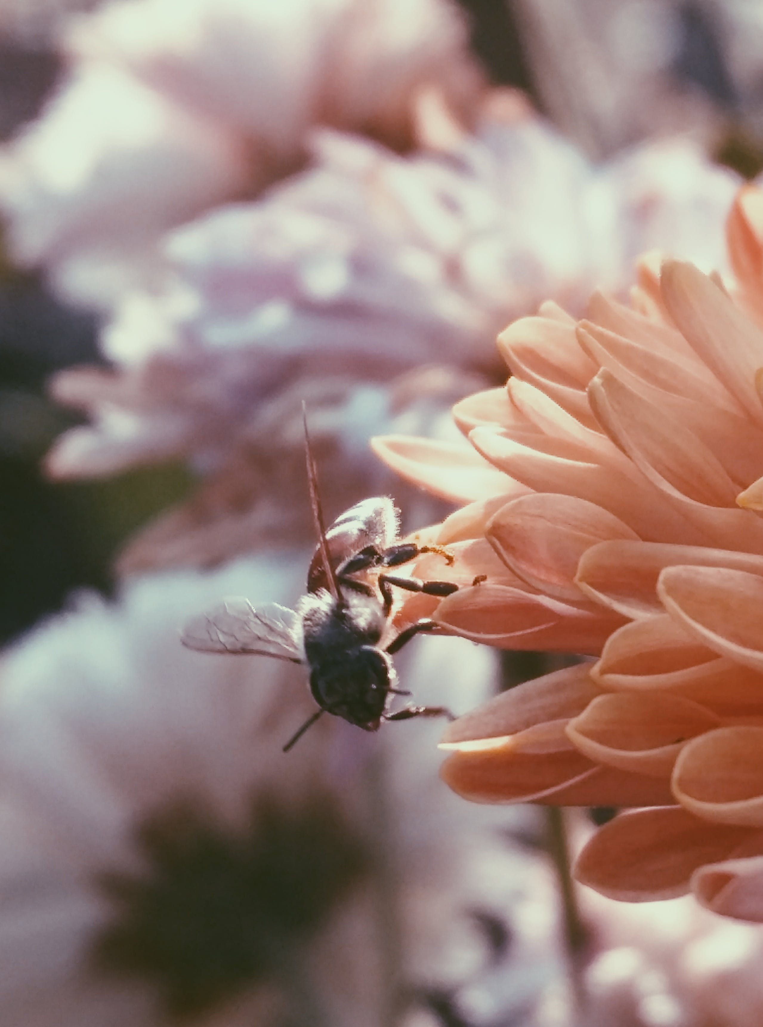 Selective Focus Photography of Bee on Flower