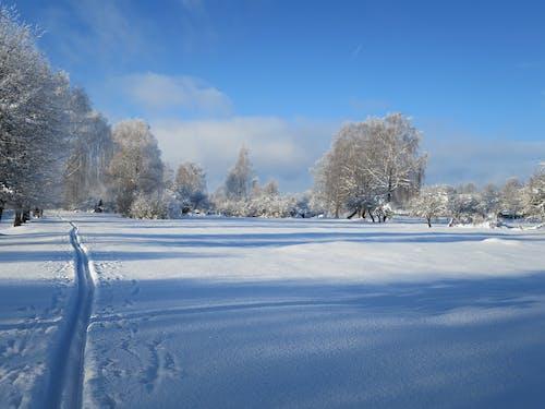 Gratis lagerfoto af forkølelse, letland, sne, solskinsdag