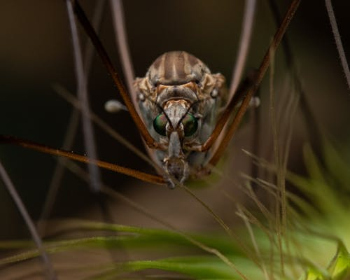 A Close-Up Shot of an Insect