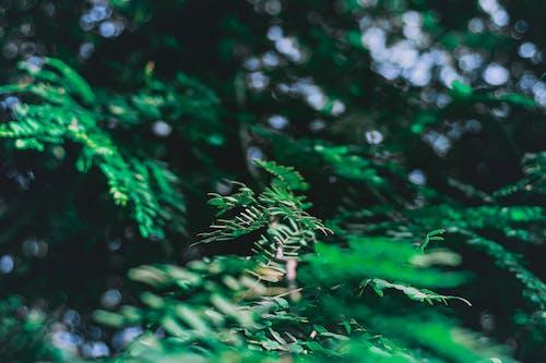 Ảnh lưu trữ miễn phí về cận cảnh, cây xanh, mơ hồ, tán lá