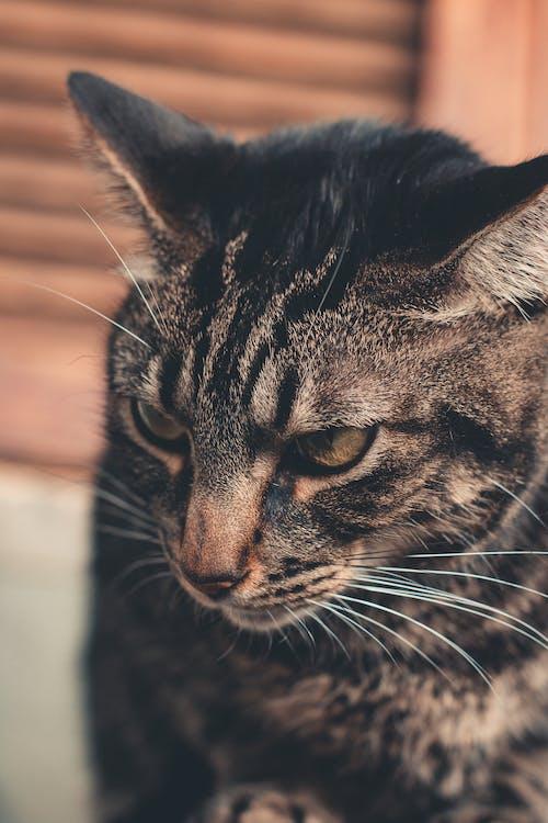 A Close-Up Shot of a Cat